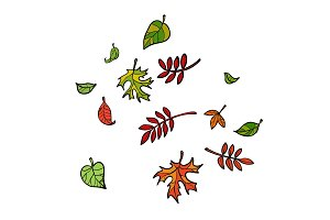 autumn leaves, nature trees
