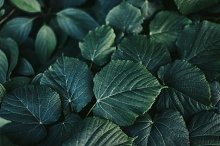 Dark green leaves by  in Abstract