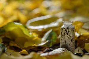 Bottle dirty old autumn background