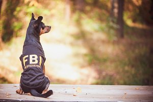 Dog is an FBI agent. Funny puppy toy