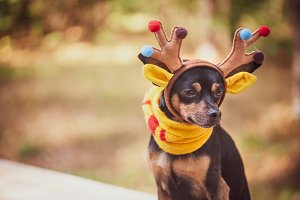 Dogs in deer costume, Autumn mood