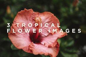 3 Tropical Flower Photos