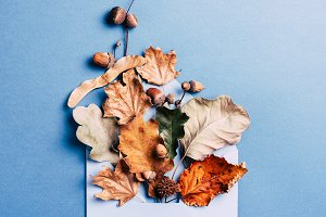 Dry leaves in blue envelop.