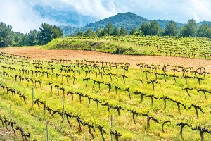 Vineyard with mountains on backgroun