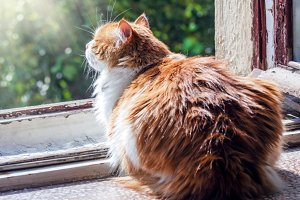 Cat catches sunny rays on window