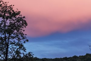 Blue-pink sky above trees