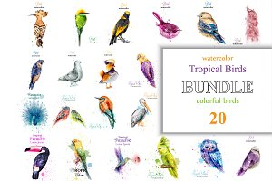 Vector bundle 20 watercolor birds