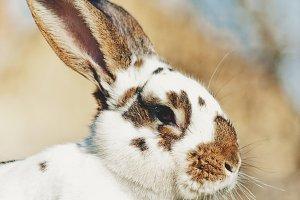 Big rabbit portrait