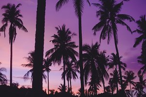 Tropical sunset palm background