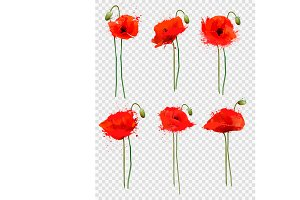 Set of a red poppies flowers. Vector