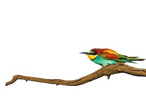 colored exotic bird sitting on a dry