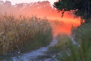Sunset and red dust on the edge of a