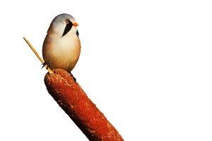 wild fluffy bird isolated on white