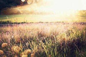 Autumn grass field and sunbeams