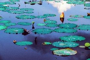 Colorful swamp