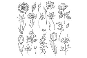 Hand drawn plants. Vector pictures
