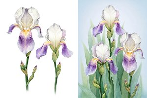 Watercolor iris flowers kit