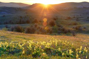 Field of yellow flowers with mountai