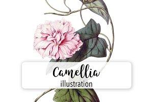 Florals: Vintage Camellia 306