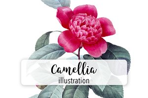 Florals: Vintage Camellia