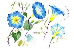 Elegant ipomoea blue flower PNG set