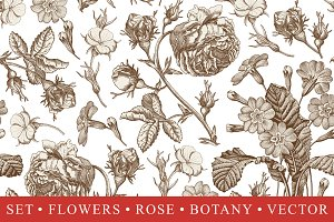 Set Seamless Flowers Rose Botany