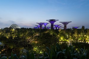 Supertree Grove. Garden by the bay i