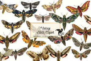 Vintage Moth Clipart