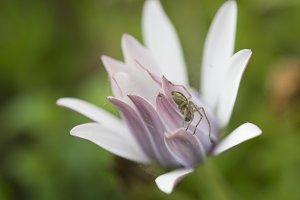 spiders in flower