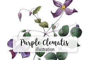 Flowers: Vintage Purple Clematis