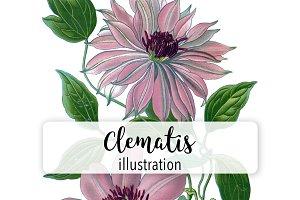 Flowers: Vintage Clematis Viticella