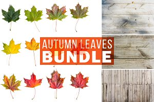 Autumn Leaves Bundle
