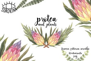 Protea and plants watercolor set