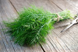 Bunch of fresh green dill.