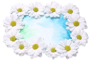chamomiles flower background