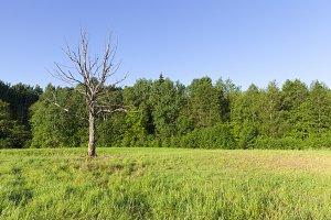 dry tree growing in a field