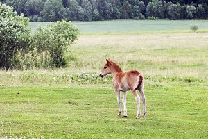 one small foal