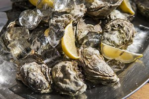 Oyster with lemon in ice in a sunny