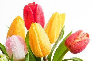 Colorful tulips flowers bouquet