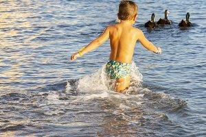 Little kid chasing ducks