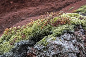 Green Moss on Red Lava #06