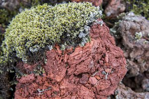 Green Moss on Red Lava #05