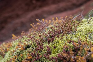 Green Moss on Red Lava #01