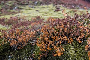 Green Moss on Red Lava #02