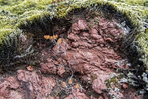 Green Moss on Red Lava #03
