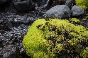 Neon Green Moss #04