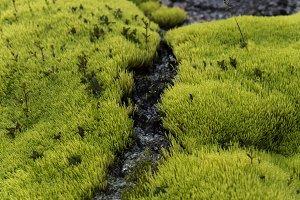 Neon Green Moss #06