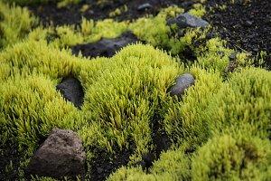 Neon Green Moss #05