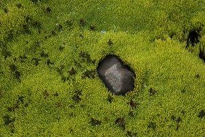 Neon Green Moss #03