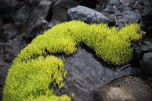 Neon Green Moss #02